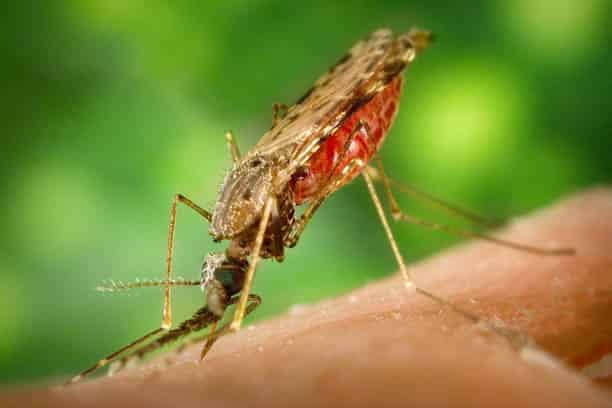 informed healthcare solutions malaria facts april 2019 newsletter mosquito drinking blood